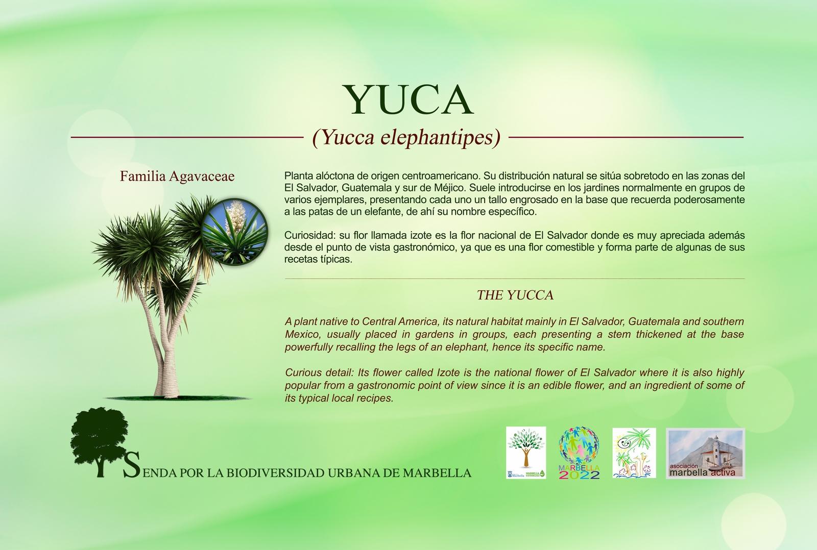 1.1-yuca-low