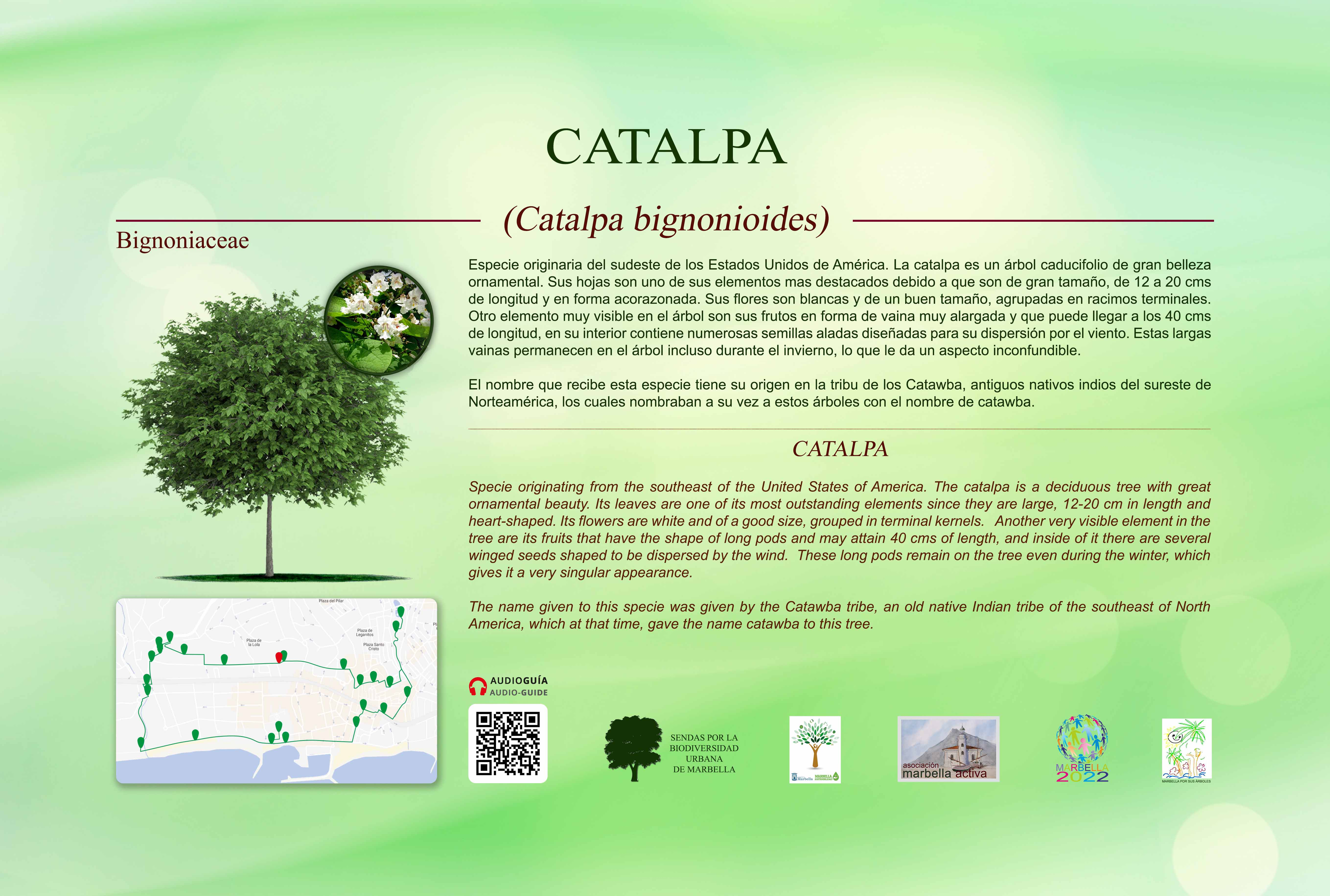 15-CARTELES-arboles-40-x-25-cm-marbella