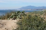 Paisaje dunar Marbella