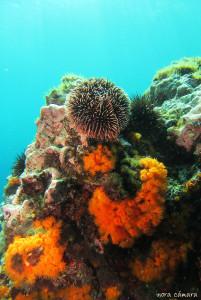 Ecosistema marino típico los fondos rocosos marbellíes.