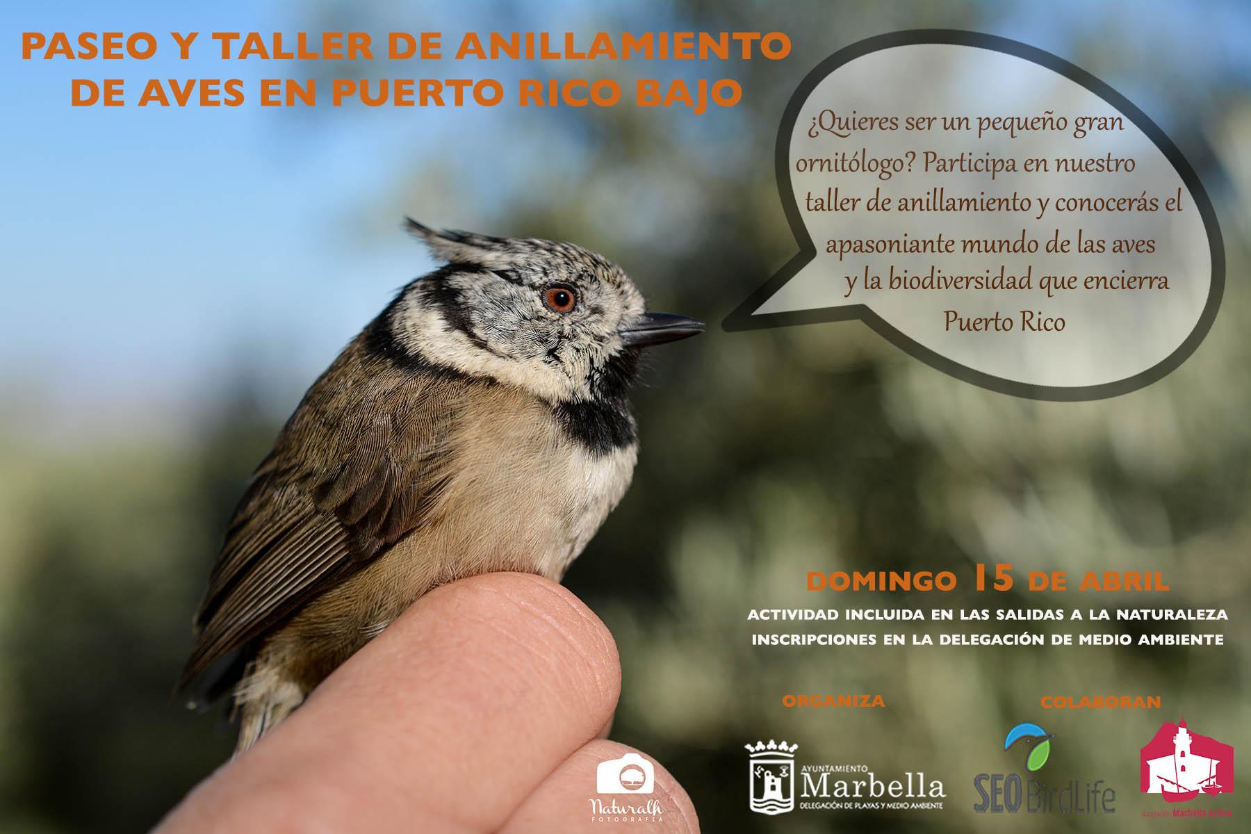 Resultado de imagen de Paseo y Taller de Anillamiento de aves en Puerto Rico Bajo
